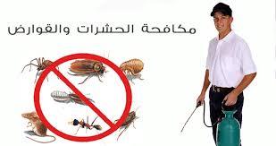 رش مبيدات بالمدينة المنورة