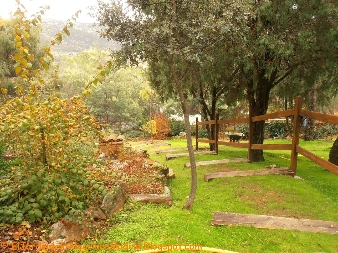 El jard n de la alegr a un trocito de oto o en mi jard n for Jardines con arboles y arbustos