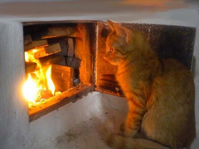 Россиянин бросил в горящую печь кота, мешавшего ему выпивать!