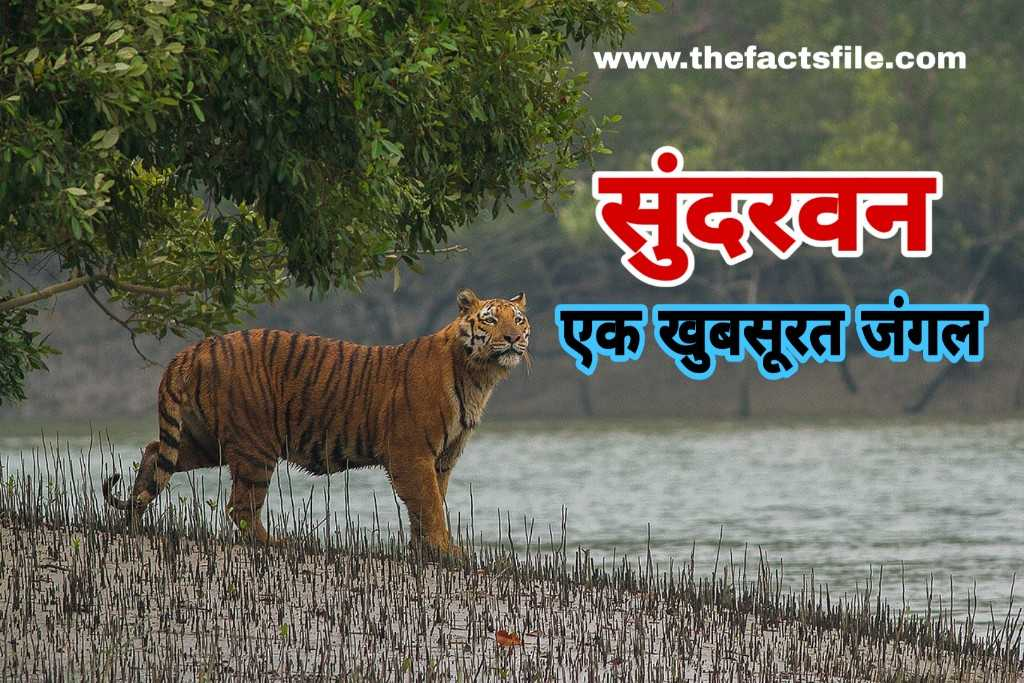 Amazing Facts and Information about Sundarban National Park in Hindi - सुंदरवन से जुड़े रोचक तथ्य