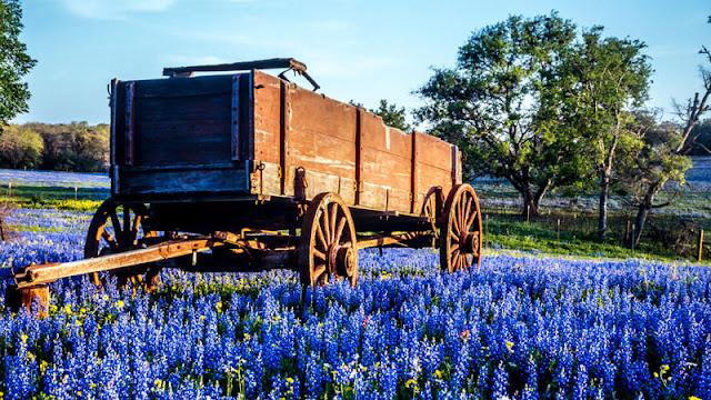 wood cart in flower field