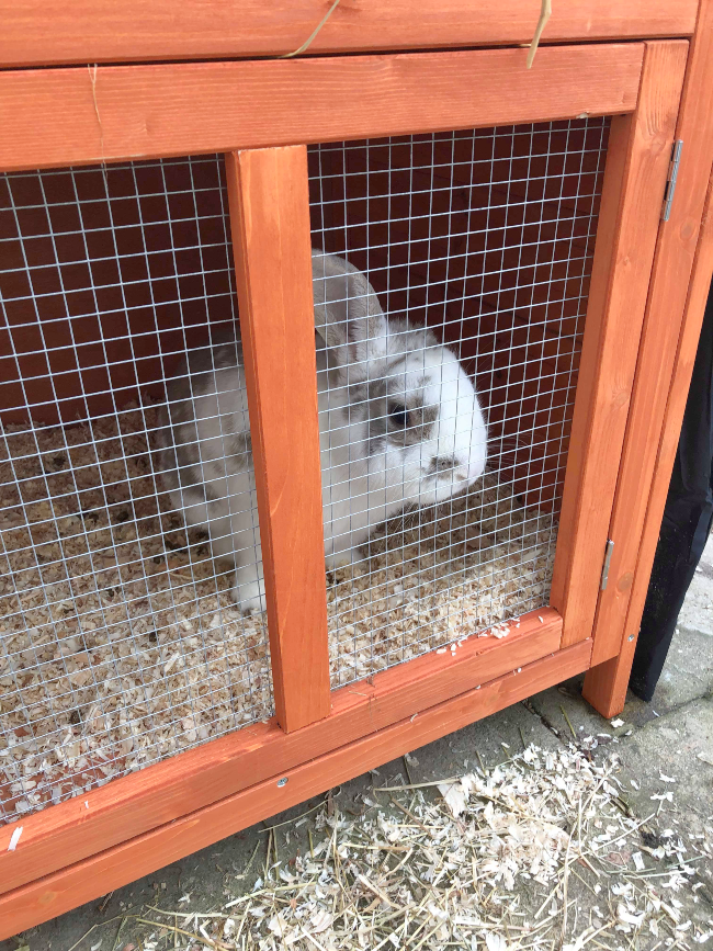 White and grey bunny behind metal grille