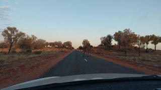 Dzikie wielbłądy biegają po Australii