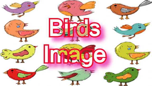 All Kind of Birds Images with Name