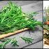 Rosemary Herb May Help Improve Mood And Memory