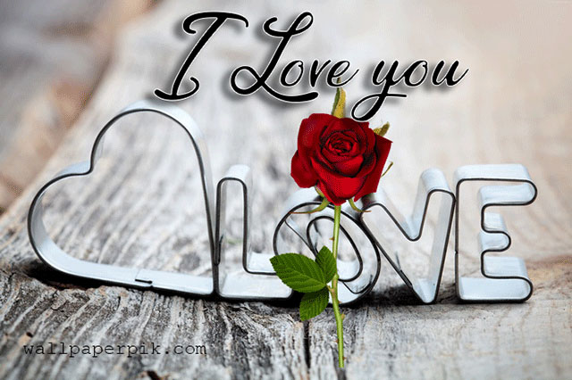 rose red flower  I Love You Images pics wallpaper pictures free hd