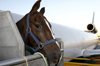 https://www.dreamstime.com/stock-photo-air-transportation-horse-race-loading-to-airplane-to-export-sao-paulo-brazil-image81331998#res1853317