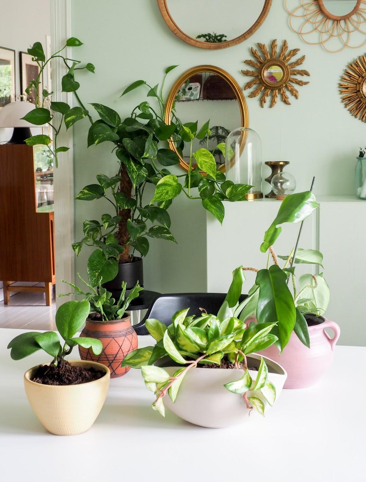 ruukku kasveille