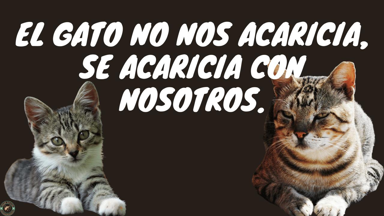 Frases tiernas para gatos