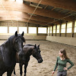 The basis of good horsemanship |       being with horses