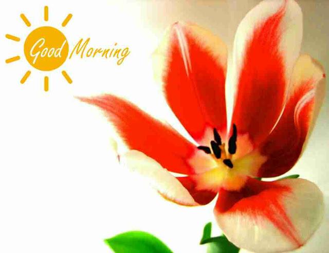 Awesome good morning image with orange flower