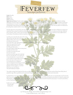 feverfew, herbal remedy, magic, herb magic, green witchcraft, kitchen witchcraft, witch