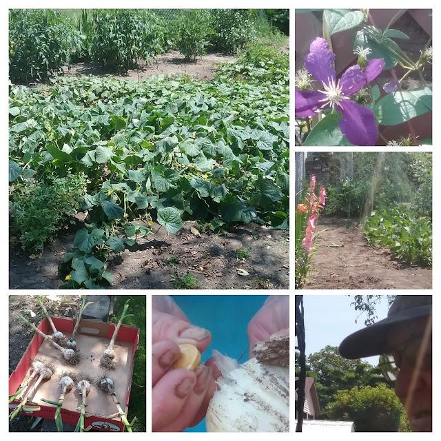 metamora herald garden pictures