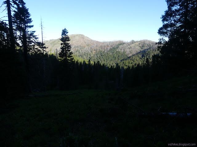 Baldy Peak between the trees