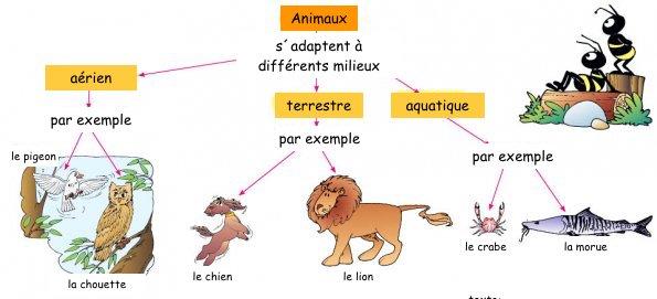 Zwierzęta - słownictwo 10 - Francuski przy kawie