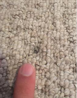 carpet repair cambridge