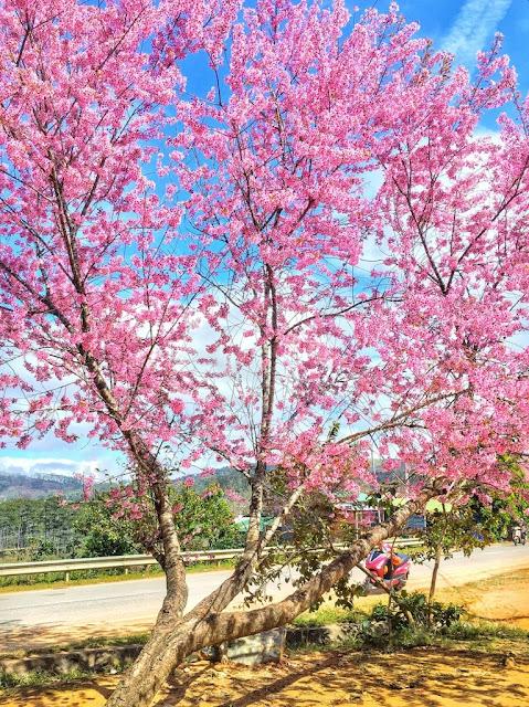 Chiêm ngưỡng vẻ đẹp tuyệt trần của vùng ngoại ô Đà Lạt 7