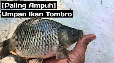 umpan ikan tombro