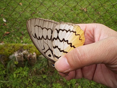 Butterfly Catching/Picture in Cameron Highlands jungle.