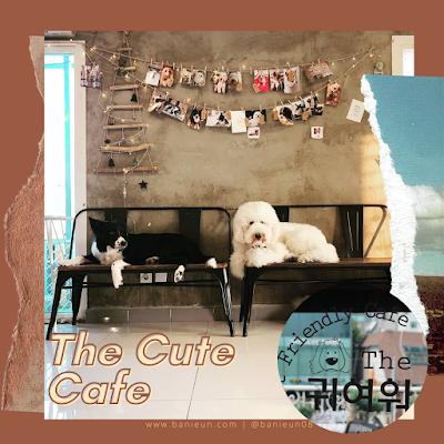 The cute cafe hongdae