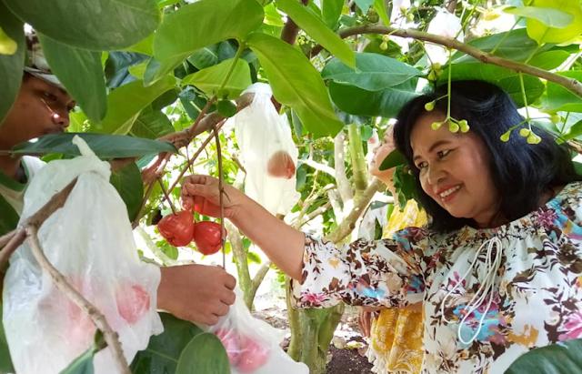 Objek Wisata Baru Medan Istana Jambu | Wisata Agrowisata Konsep Menarik