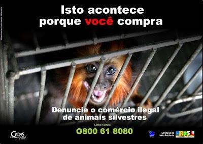 Tráfico, animais, silvestres, comércio ilegal, contrabando de animais, animais, animais silvestres, animais nativos, Animal trafficking, animal, conservação