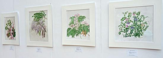 Hiromi Hyogo Leguminous Plants