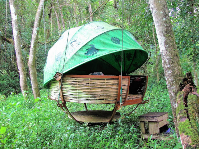 nest nam et phou louey national protected area laos