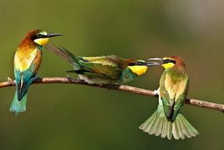 Fabula los 3 Pájaros en la Cerca