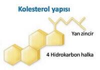 kolesterolün yapısı