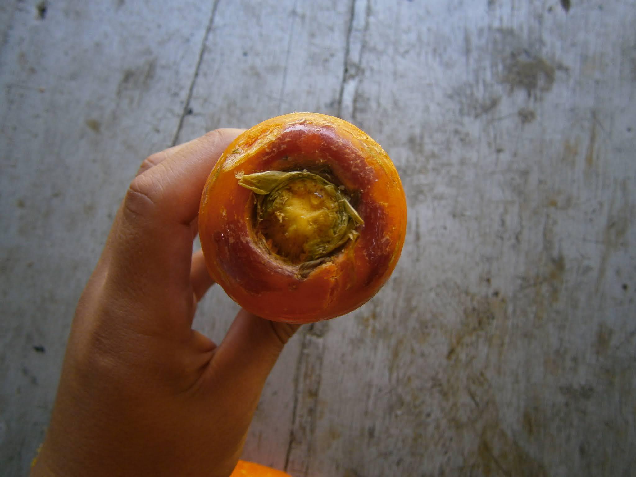 Zanahoria sostenida sobre la mano de una persona joven