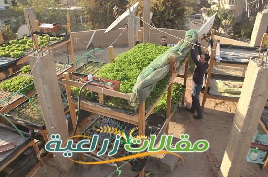 زراعة سطح المنزل فى 20 خطوة - مقالات زراعية