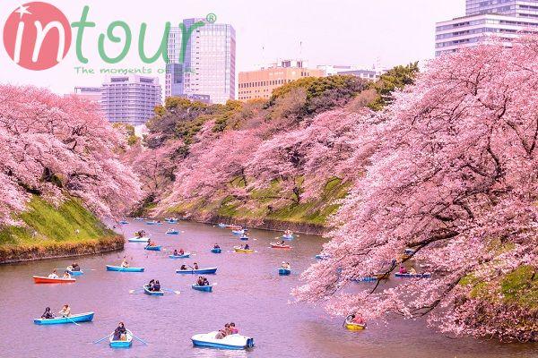 Vẻ đẹp của Chidori Ga Fuchi vào mùa xuân