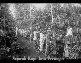 Sejarah Kopi Java Preanger