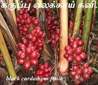 black cardamom fruit