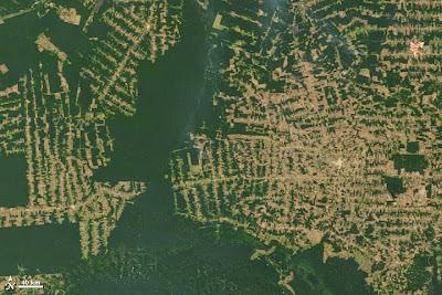 Desmatamento, amazônia, Reserva legal, Car, biodiversidade, conservação da biodiversidade, desmatamento, cadastro ambiental rural, área mínima de reserva legal, habitat, perda de habitat, agropecuária, perda de biodiversidade, extinção, degradação ambiental, blog natureza e conservação, natureza
