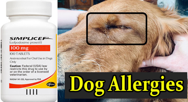 simplicef-for-dog-allergies