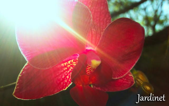 Luz solar direta
