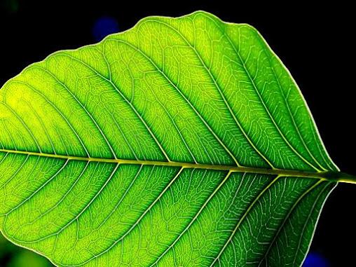 Pengertian Fotosintesis Adalah