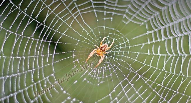 Örümceklerden Kurtulmak İçin Doğal Yollar - inanankalpler.net