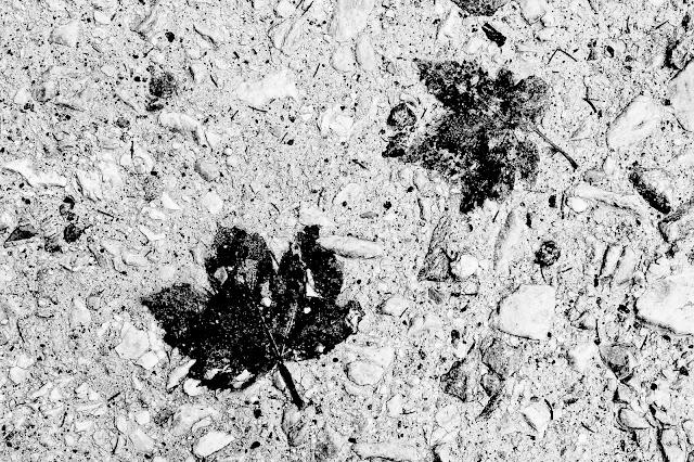Mozaika tauryjska - album odklejonej czarno-białej fotografii koncepcyjnej. fot. Łukasz Cyrus, Ruda Śląska, 2017.