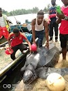 STRANGE SEA MONSTER CAUGHT IN BAYELSA .