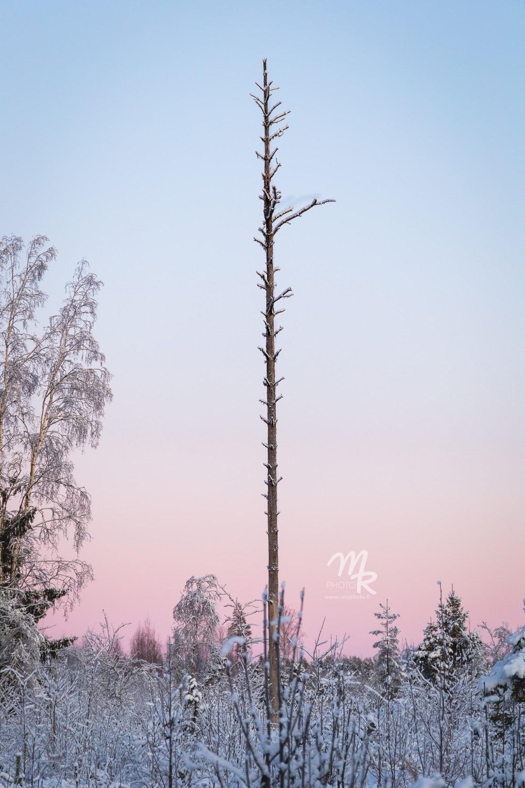 pinkki auringonlasku