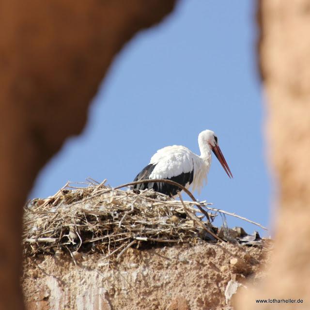 Marokko Fotografien