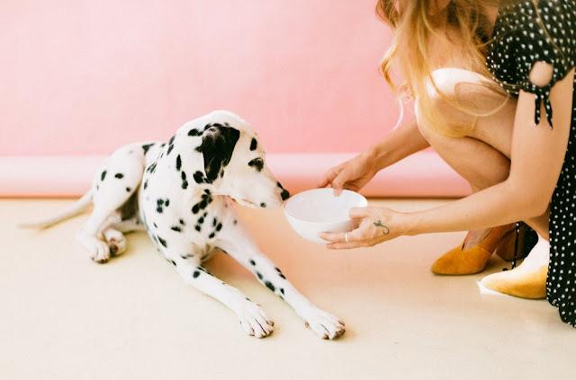 Tips Memilih Makanan Anjing yang Baik
