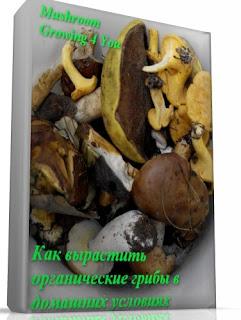 Как вырастить органические грибы в домашних условиях