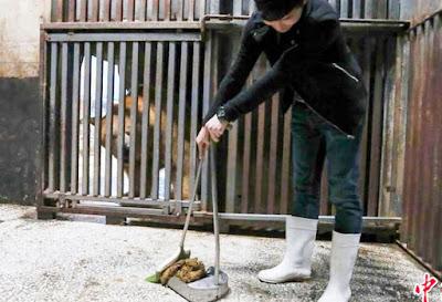 Visitatori di zoo in Cina pagano per pulire le feci dell'orso polare
