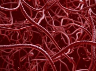 parasitologia-parasitas-roteiro-estudos