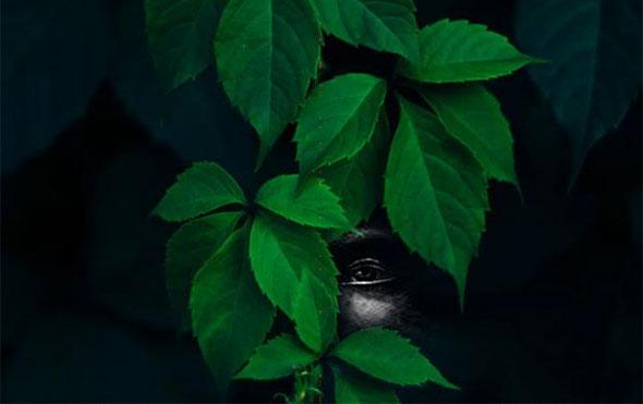 Arbusto de hojas con la imagen de un ser tenebroso en las sombras