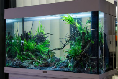 Bagaimana cara merawat akuarium yang baik dan benar